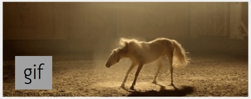 Happy Horse Shakes Off the Day